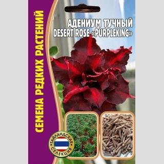 Адениум тучный DesertRose PurpleKing - Семена Тут