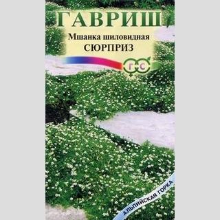 Мшанка Сюрприз - Семена Тут