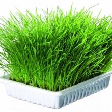 Смесь Зеленые витамины для КОШЕК - Семена Тут
