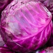 Капуста Вегетарианка - Семена Тут