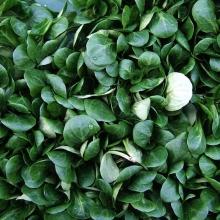Валерианелла Зимний салат колосковая - Семена Тут
