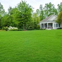 Газонная трава Зеленый скороход (1 кг) - Семена Тут