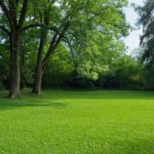 Газонная трава Парк (100 гр) - Семена Тут