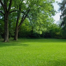 Газонная трава Парк (500гр) - Семена Тут