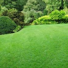 Газонная трава Без забот (1кг) - Семена Тут