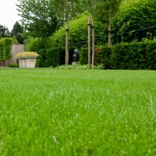 Газонная трава Изумрудная поляна (универсальный газон) (1кг) - Семена Тут