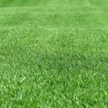 Газонная трава Реквием (500 гр) - Семена Тут