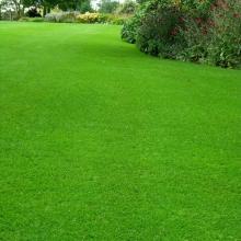 Газонная трава Северный парк (1кг) - Семена Тут