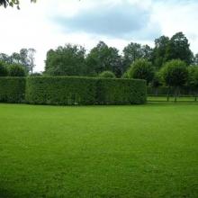 Газонная трава Парковая смесь ORNAMENTAL (1кг) - Семена Тут