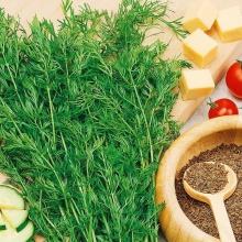 Тмин овощной Душистый - Семена Тут