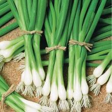 Лук Зеленое перо батун - Семена Тут