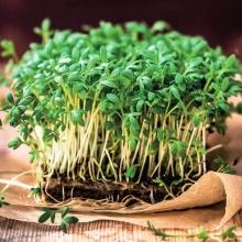 Микрозелень Кресс-салат микс - Семена Тут