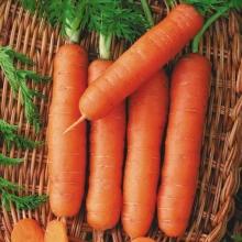 Морковь Без сердцевины Пралине - Семена Тут