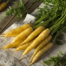 Морковь Желтая красавица - Семена Тут
