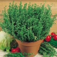 Тимьян овощной Ароматная грядка - Семена Тут