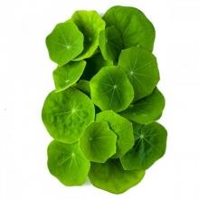 Микрозелень Настурция мини - Семена Тут
