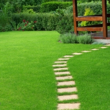 Газонная трава Солнечная поляна (1кг) - Семена Тут
