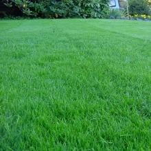Газонная трава Тенистый парк (1кг) - Семена Тут