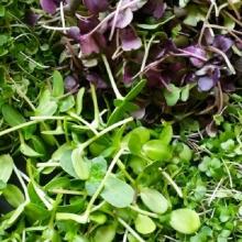 Микрозелень Базилик Ароматный салат смесь - Семена Тут