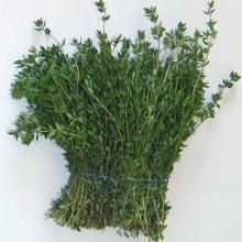 Тимьян овощной Лимончелло - Семена Тут