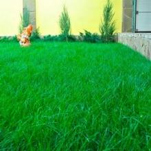 Газонная трава Смесь для солнечного участка SUNSHINE (1кг) - Семена Тут