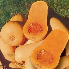 Тыква Арахисовое масло мускатная - Семена Тут