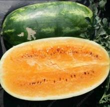 Арбуз Американский Оранжевый F1 (США) - Семена Тут