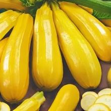 Кабачок Бананы на Грядке F1 - Семена Тут