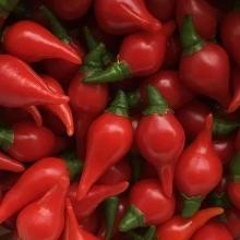 Перец Бикиньо красный китайский - Семена Тут