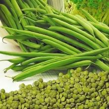 Чечевица Зеленая - Семена Тут