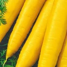 Морковь Для Плова - Семена Тут