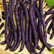 Фасоль Пурпурная королева спаржевая - Семена Тут