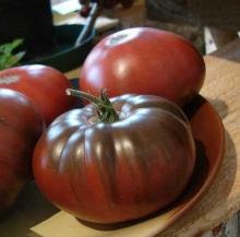 Томат Шоколадный Арбуз (Реликтовые томаты) - Семена Тут