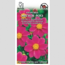 Георгина Мигнон Роуз - Семена Тут