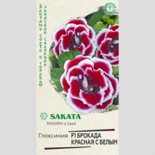 Глоксиния Брокада красная с белым F1 - Семена Тут