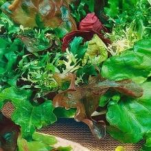 Бэби салат Городской садик смесь - Семена Тут