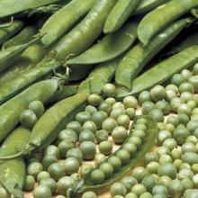 Горох Альфа (Большой пакет) - Семена Тут