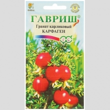 Гранат Карфаген (карликовый) - Семена Тут