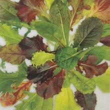 Салат листовой Бэйби Ливз Цветной - Семена Тут