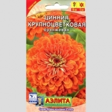 Цинния Крупноцветковая оранжевая - Семена Тут