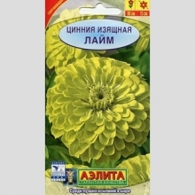 Цинния Лайм изящная - Семена Тут