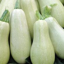 Кабачок белоплодный Грибовские 37 - Семена Тут