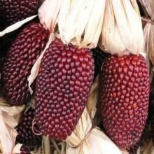 Кукуруза Клубничный попкорн - Семена Тут