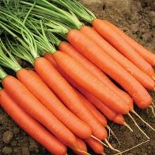 Морковь Красная звезда®F1