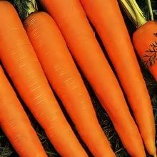 Морковь Лосиноостровская 13 (гранулированная) - Семена Тут