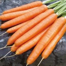 Морковь Алтайская Сахарная (УД) (на ленте) 8м - Семена Тут