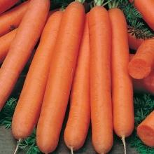 Морковь Без Сердцевины (УД) (гелевое драже) - Семена Тут