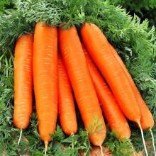 Морковь Деликатесная (на ленте) 8м - Семена Тут