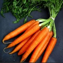 Морковь Деликатесная  среднеспелый - Семена Тут
