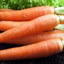 Морковь Детская Сладкая (гелевое драже) - Семена Тут